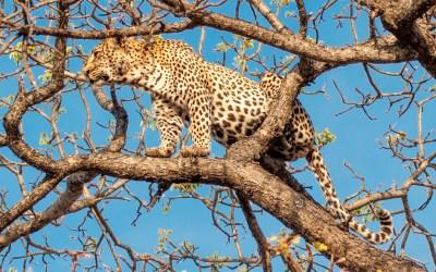 Motswari – Responsible Tourism in Action