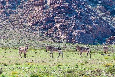 Kuiseb=Zebras.