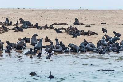 Walvis Bay Cape fur seals colony.