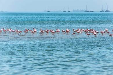 Walvis Bay-Lagoon.