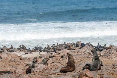 Cape Cross-Seals.