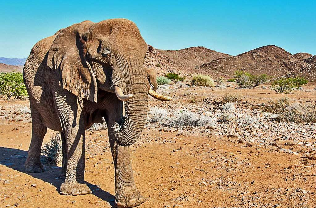 Journey to the Edge of Africa – The Damaraland Experience