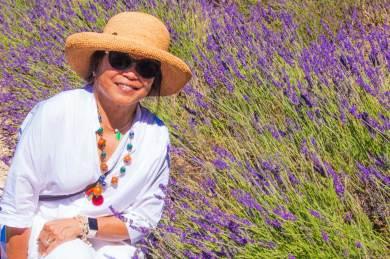 Luberon-lavender tourist.