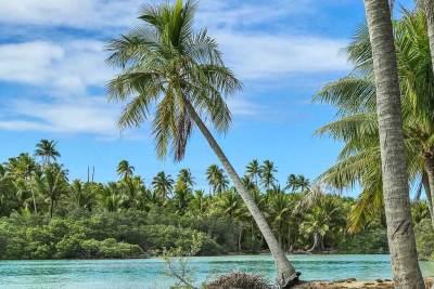 Gauguin-Fakarava coconut.trees.