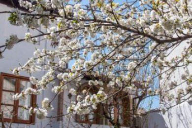 Granada-Albacin patio