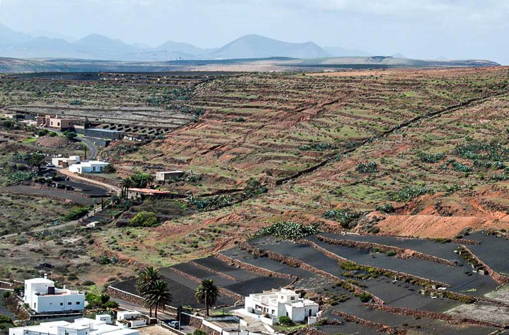 Risen from the Ashes – the Vineyards of Lanzarote
