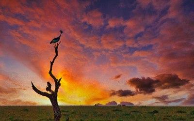 African Diaries – Kenya's Magical Mara