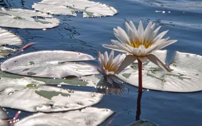 African Diaries — The Wetland Eden of the Okavango Delta
