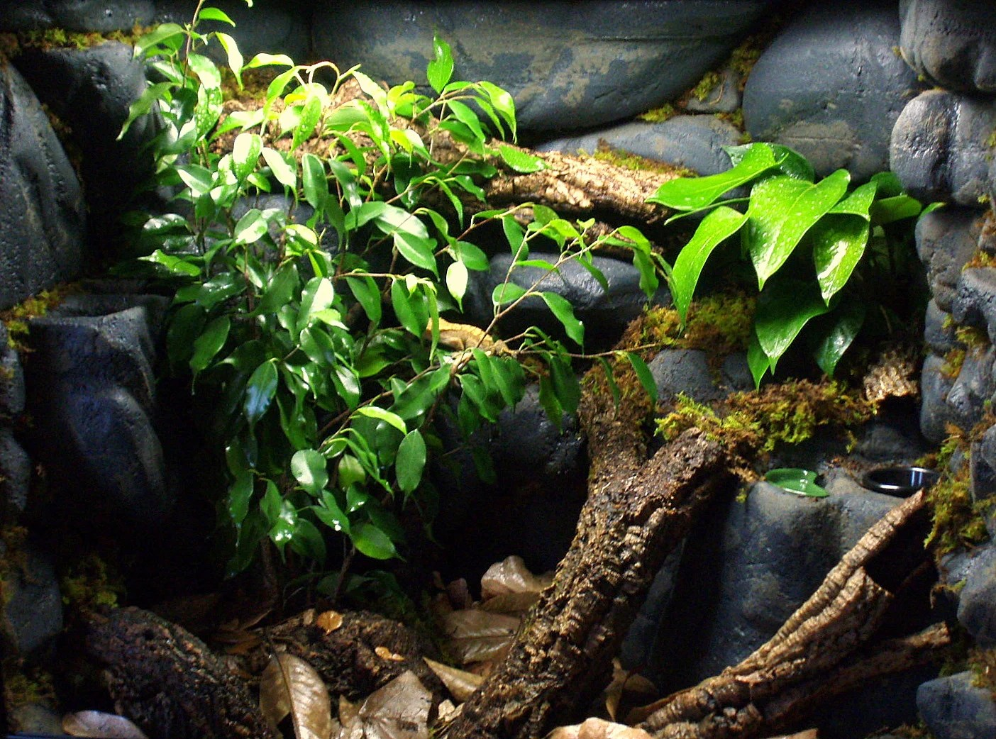 If You Want A Vivarium With A Fake Rock Background, Follow Our How To Guide  On How To Make A Fake Rock Background.