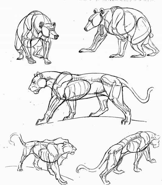 Tips On Drawing Animals Animal Drawing Joshua Nava Arts