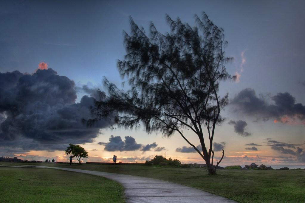 Paseo Tree