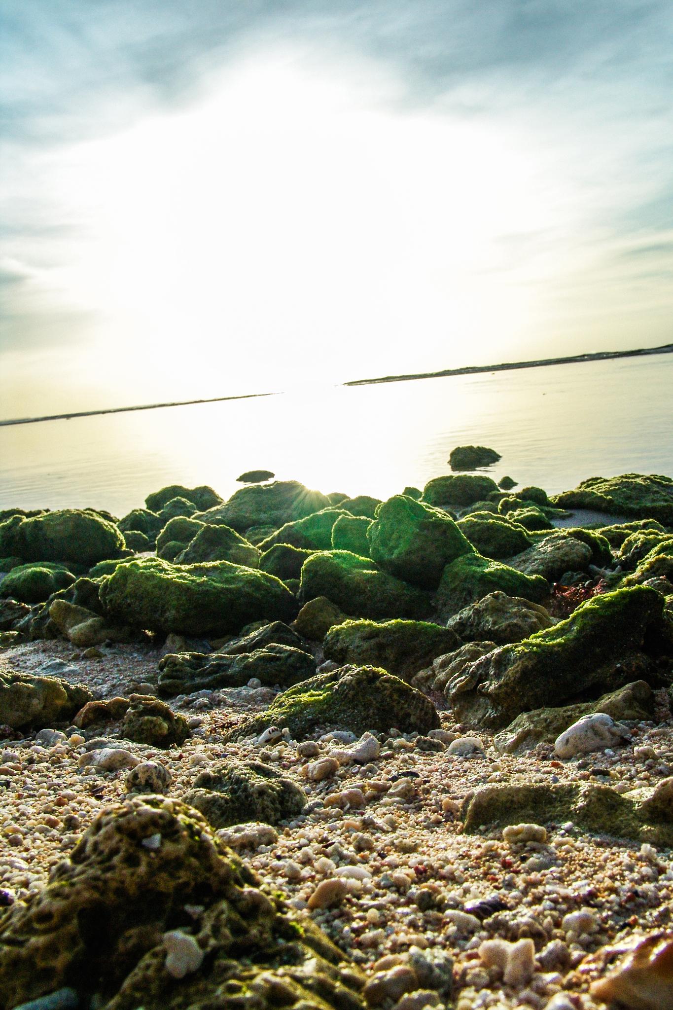 Low Tide (March 2006)