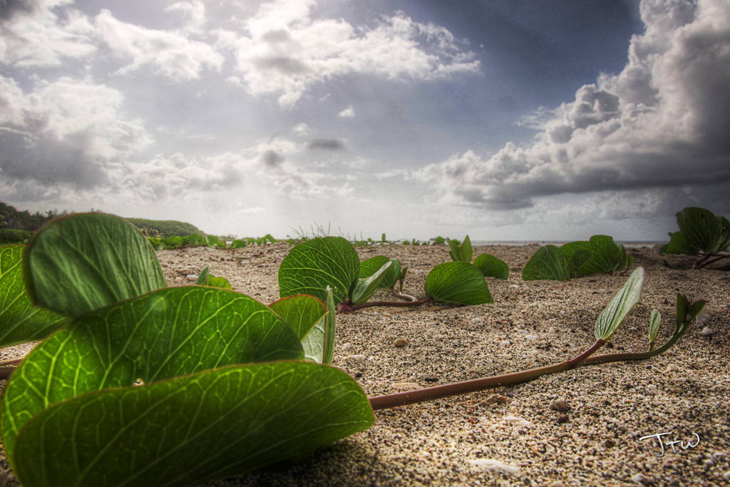 Vines in the Sand