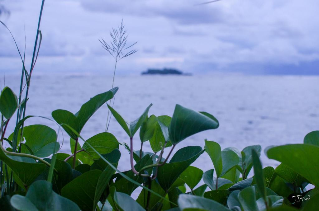 Shoreline Growth