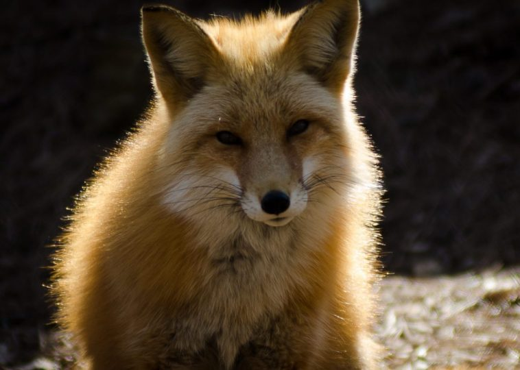 Wild Life Photography by Josh Vaughn