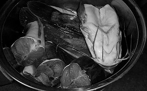 Photo of Cleaning Catfish: How to Clean a Catfish Before Cooking/Frying