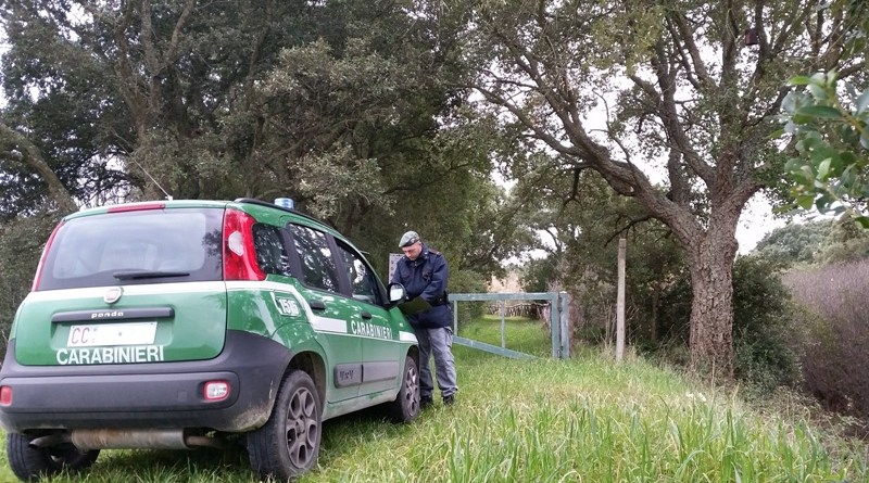 Brindisi: 22 tartarughe sequestrate