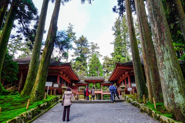 Le temple est niché au cœur d'une forêt.