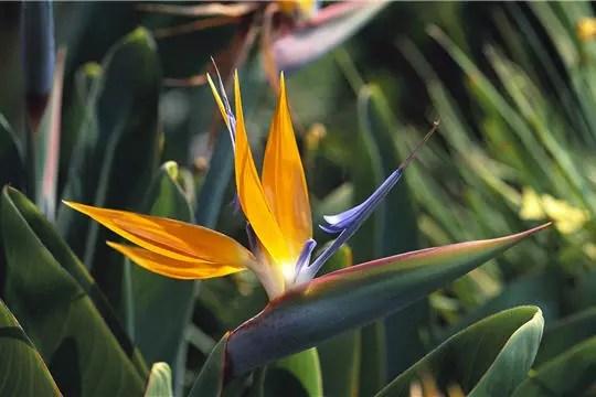 fond ecran fleur couleur