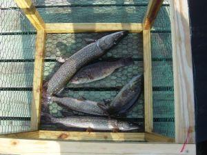 Good Week of Fishing