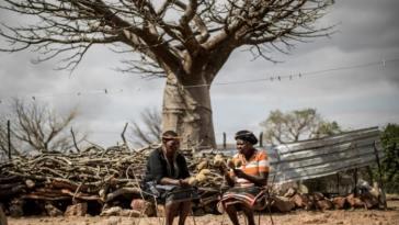 fruit du baobab