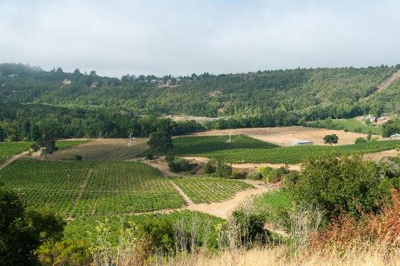 vineyards-sl-3