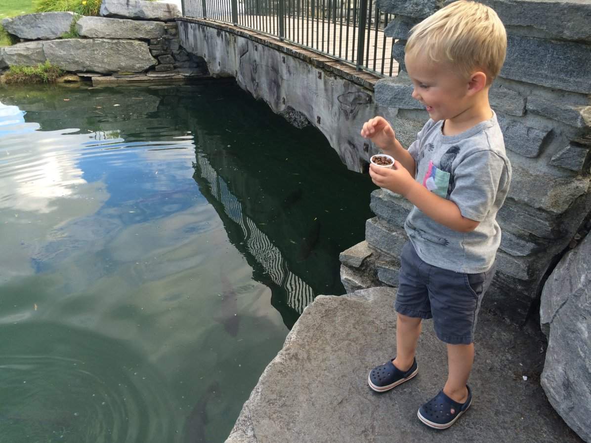 Feeding the fish at Orvis