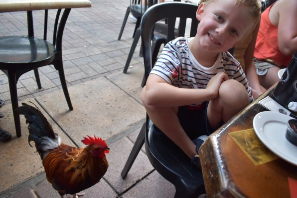 Andrew making friends with a rooster at El Mason de Pepe