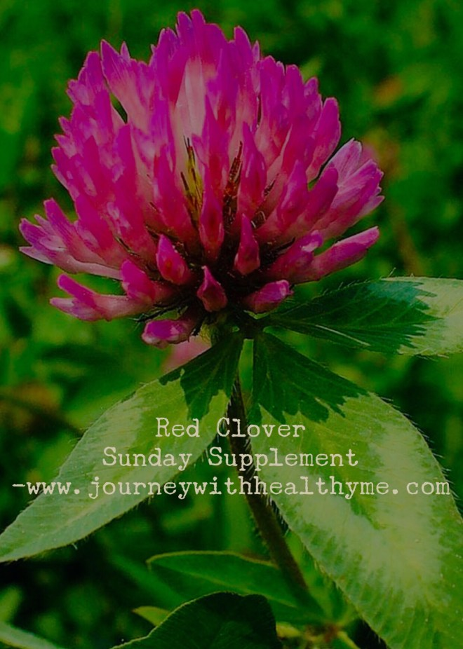 Red Clover Sunday Supplement