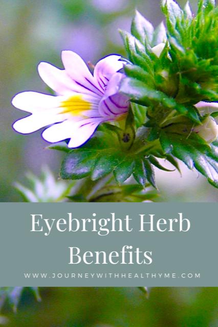 Eyebright Herb Benefits title meme