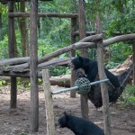 Sun bears at Kuang Si Falls