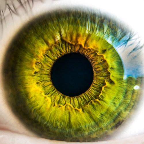 5 senses sight