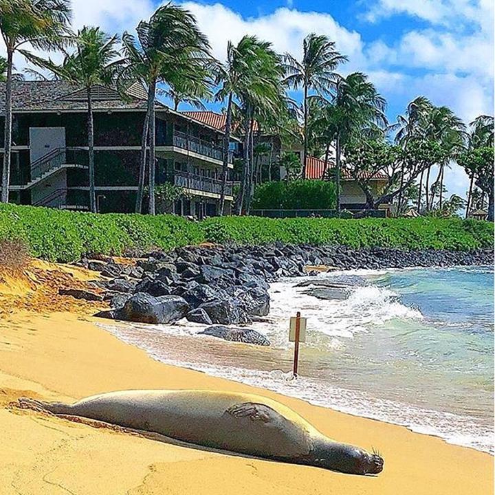 koa kea resort Hawaii