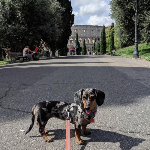 rome doggy