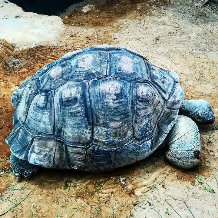 tortoise island