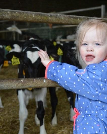 Op bezoek bij Melkveebedrijf Meijer | #ahbuitendag