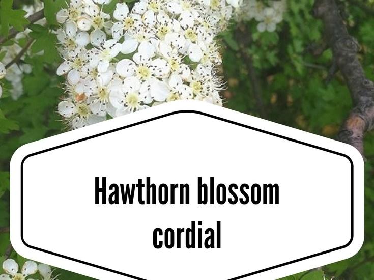 Hawthorn blossom cordial