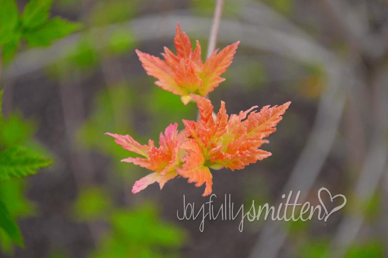 botanicalgardens20149