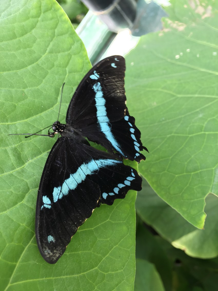 A Trip to the Butterfly Pavilion in Westminster Colorado with Joyfully Smitten