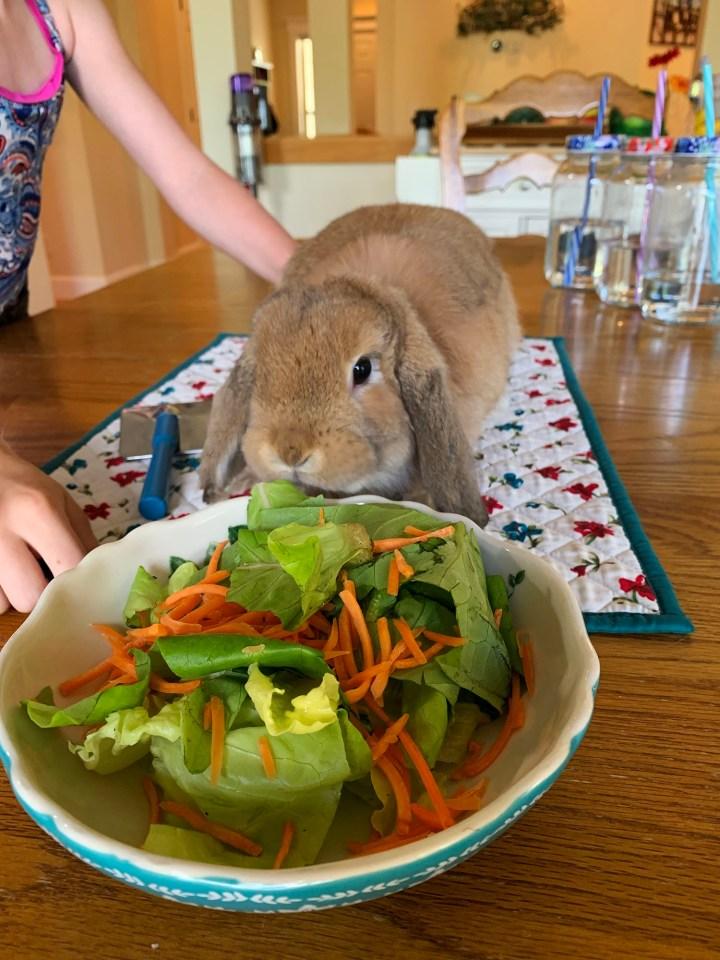 Bunnie salad