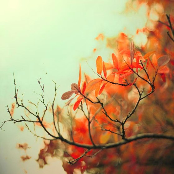 Autumn Photography by Raceytay of Etsy.