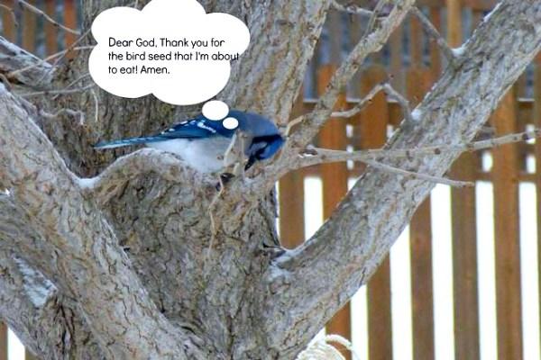#bird photo