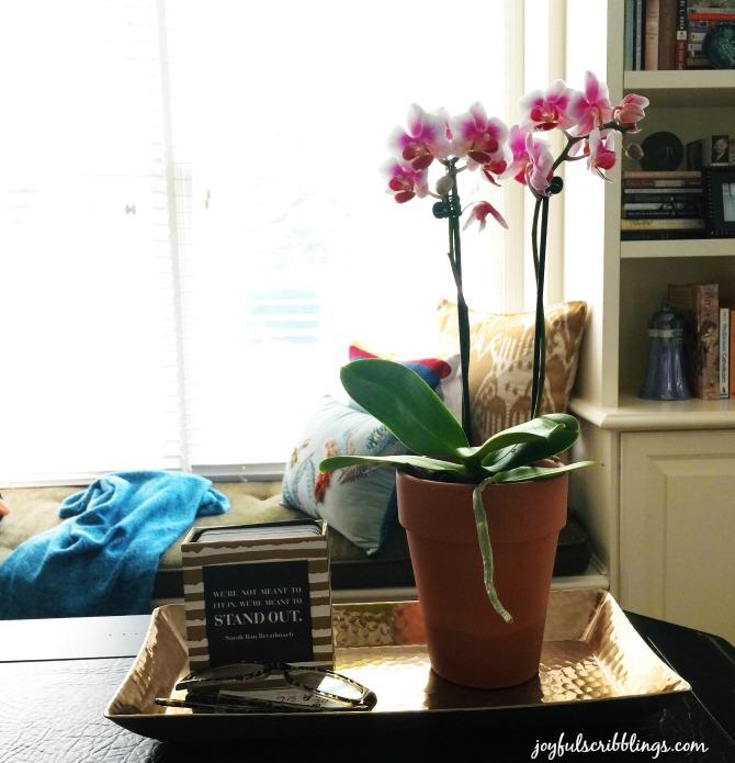 5 Hard to Kill Houseplants