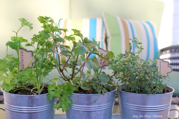 Mini Herb Garden at www.joyinourhome.com