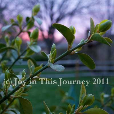 twig at dawn