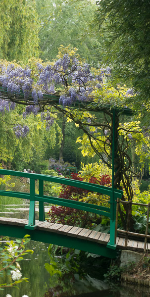 photo of wisteria on the Japanese Bridge