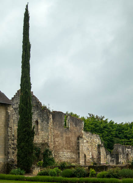 Photo of tall poplar and ruins at Saint-Cosme Priory