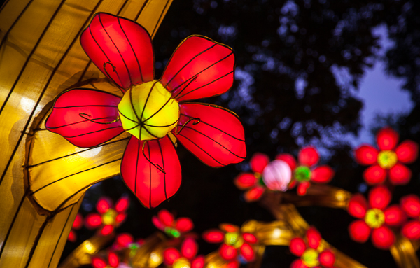 Cherry Tree Arches, Lantern Festival, Missouri Botanical Garden
