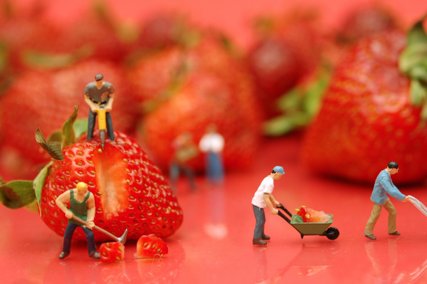 Strawberries and workers