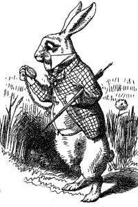 white rabbit-pub